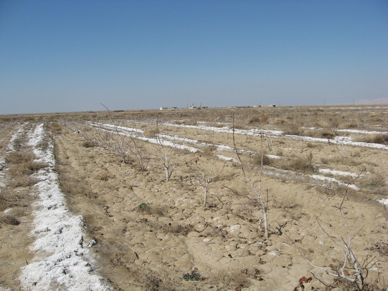 اصلاح خاک